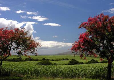 Photograph - Maui by Robert Lozen