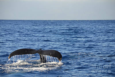 Photograph - Maui Whale Tail by Russell Rebelo