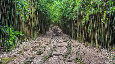 Photograph - Maui's Bamboo Forest  by Pierre Leclerc Photography