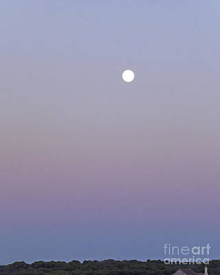 Photograph - Mauve Moonlight by Dee Flouton