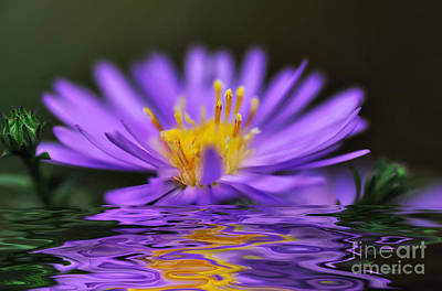 Mauve Softness And Reflections Art Print by Kaye Menner