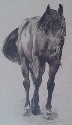 Tennessee Walker Drawing - Maverick by Erin  Coy