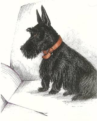 Scottish Terrier Drawing - Maxwell by Margaryta Yermolayeva