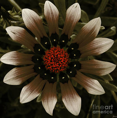 Art Print featuring the photograph May May  by Janice Westerberg