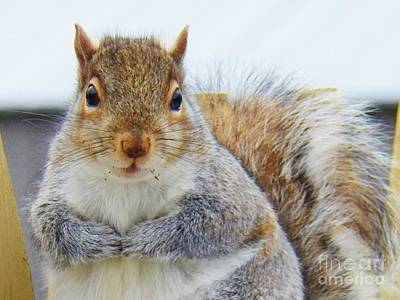 Photograph - May I Have A Peanut Please by Judy Via-Wolff