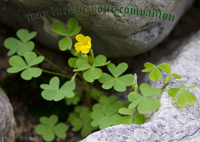 Photograph - May Luck Be Your Companion by LeeAnn McLaneGoetz McLaneGoetzStudioLLCcom