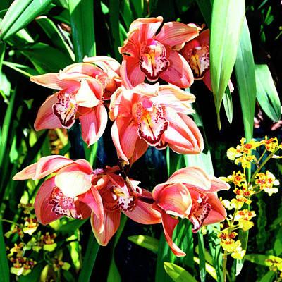 Joy Orchids Art Print
