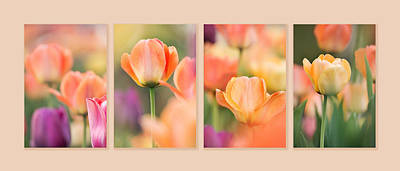 Photograph - May Tulips Collage by Theo OConnor