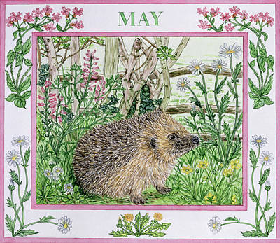Hedgehog Wall Art - Photograph - May Wc On Paper by Catherine Bradbury