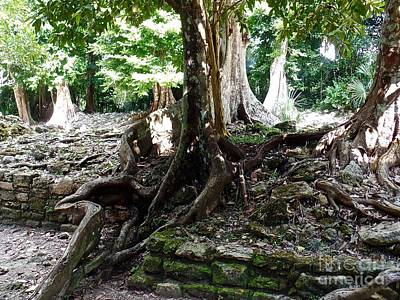 Photograph - Mayan Architecture Covered By Centuries Of Tree Roots by John Potts