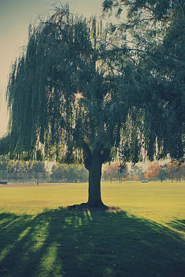 Willow Trees Photograph - Maybe We'll Find It Someday by Laurie Search