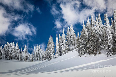 Mount Mazama Photograph - Mazama Trees by Inge Johnsson