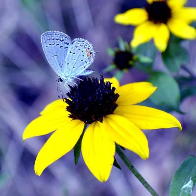 Photograph - Mazarine Blue by Deena Stoddard