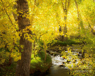 Photograph - Mcgee Creek 1 by Alexander Kunz