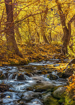 Photograph - Mcgee Creek by Tassanee Angiolillo
