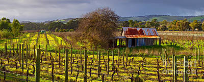 Old Abandoned Houses Photograph - Mclaren Flat Vineyard by Bill  Robinson