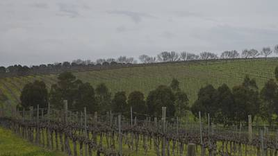 Photograph - Mclaren Vale Vineyard 1.2 by Cheryl Miller