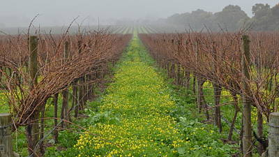 Photograph - Mclaren Vale Vineyard 1.1 by Cheryl Miller