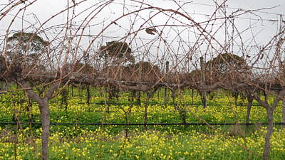 Photograph - Mclaren Vale Vineyard 1.12 by Cheryl Miller