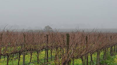 Photograph - Mclaren Vale Vineyard1.7 by Cheryl Miller