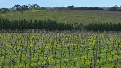 Photograph - Mclaren Vale Vineyard 1.8 by Cheryl Miller
