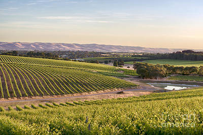 Photograph - Mclaren Vale Magic by Ray Warren