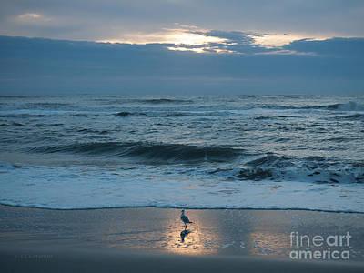 Photograph - Early Bird by Carol Lynn Coronios