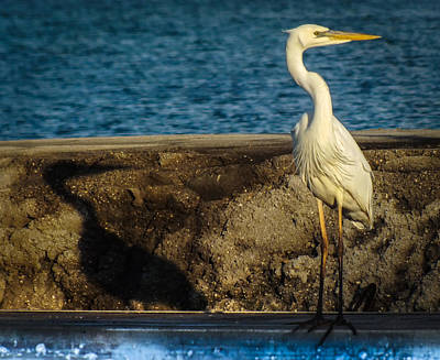 Nautical Birds Photograph - Me And My Shadow by Karen Wiles