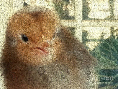 Photograph - Me Chick by Donna Brown