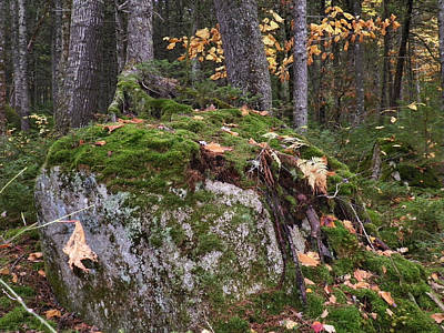 Photograph - Me Forest Floor 6 by Gene Cyr