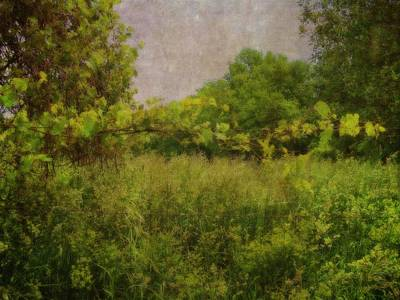 Manipulation Photograph - Meadow At Dusk by Rhonda Barrett