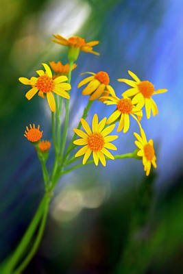 Photograph - Meadow Bouquet by Carolyn Derstine