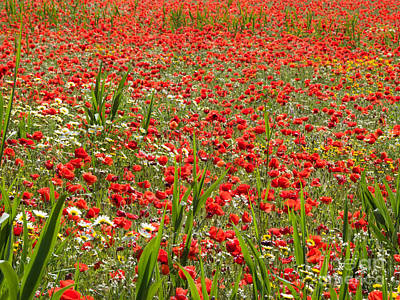 Alentejo Photograph - Meadow Covered With Red Poppies by Jose Elias - Sofia Pereira