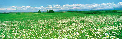 Meadow Flowers, Daisy Field Art Print by Panoramic Images