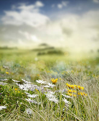 Spring Landscape Photograph - Meadow Flowers by Les Cunliffe