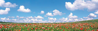 Meadow Flowers With Cloudy Sky Art Print by Panoramic Images