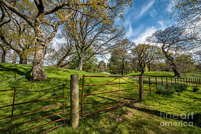 Bluebells Wall Art - Photograph - Meadow Gate by Adrian Evans