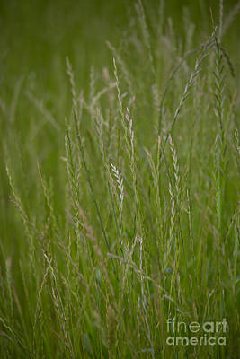Photograph - Meadow Grasses by Kay Pickens