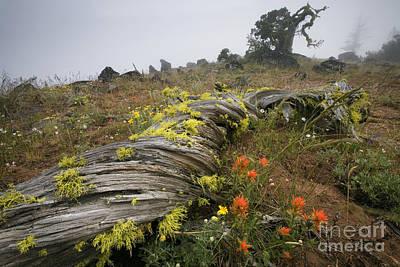 Medford Photograph - Meadow In Fog, Or by Sean Bagshaw