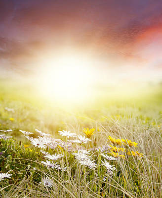 Spring Landscape Photograph - Meadow by Les Cunliffe
