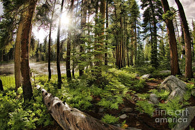 Photograph - Meadow Log And Sunshine by Blake Richards