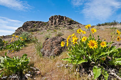 Art Print featuring the photograph Meadow Of Arrowleaf Balsamroot by Jeff Goulden