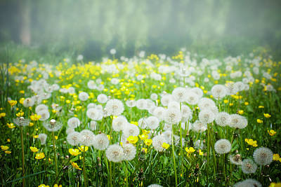 Photograph - Meadow Of Dandelions And Buttercups by Nila Newsom
