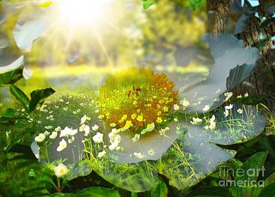 Photograph - Meadow Of Flowers With Sun Rays by Annie Zeno