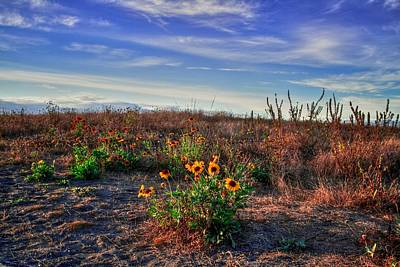 Art Print featuring the photograph Meadow Of Wild Flowers by Eti Reid