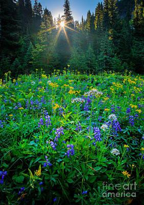 Peaceful Feeling Photograph - Meadow Sunburst by Inge Johnsson