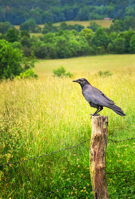 Photograph - Meadow Watcher by Carolyn Derstine