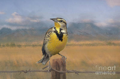 Barbed Wire Fences Mixed Media - Meadowlark On The Fence 1 by Kathryn Yoder