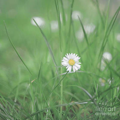Royalty-Free and Rights-Managed Images - Meadows Of Heaven by Evelina Kremsdorf