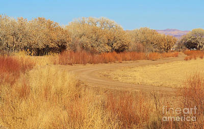 Photograph - Meandering Road by Roena King